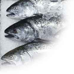 fish_processing_image
